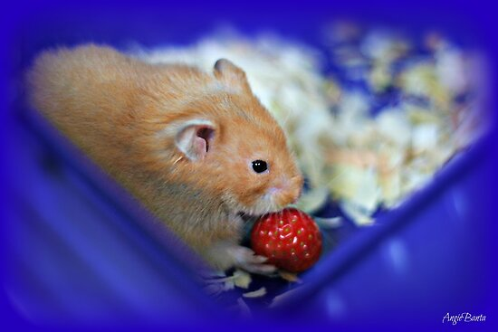 Twinkie eating a strawberry by AngieBanta