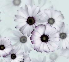 Tumbling daisies iphone case by Agnes McGuinness
