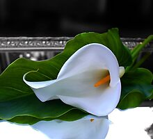 Calla Lily Reflection by DreamerByDesign