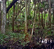 Swamp. Highlands Hammock. by chris kusik