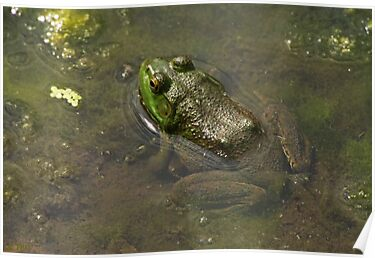 Frog April by Thomas Murphy