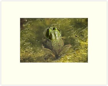 Frog May by Thomas Murphy