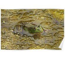 Frog October Poster