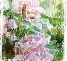 Dream Roses by Rookwood Studio ©