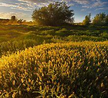 Summer Flow by Bob Larson