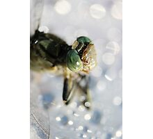 Lightly Watered Dragonfly Photographic Print