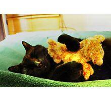 Maui the Cat (aka-Booky) Sleeping With His Baby Kitten, Stuffed Animal Photographic Print