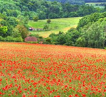 Poppy Fields Oxfordshire by Colin J Williams Photography