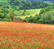 Poppy Fields Oxfordshire by Colin J Williams Photography