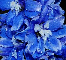 Blue Delphinium  by Tori Snow