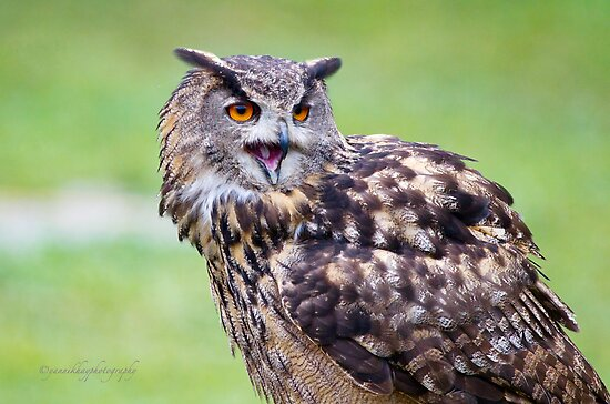 Eagle Owl by Yannik Hay