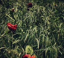 In Flanders Fields by Nicola Smith