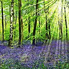 Where the Bluebells Grow by Morag Bates