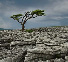 Twistleton End Scar  by eddiej