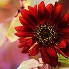 Red Sunflower by George Lenz