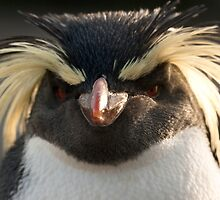 Rockhopper Staring 2 by beardyrob