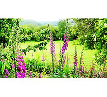 Foxgloves with Beautiful View Photographic Print