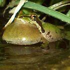 Tree frog by thedinosaurman