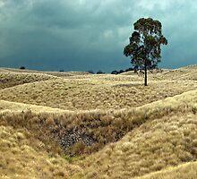 Field of Saddle Road Dreams by Ellen Cotton