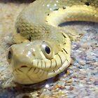 garter snake by thedinosaurman
