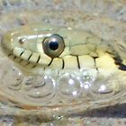 Two stripe garter snake with bubbles by thedinosaurman
