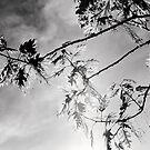 Branches by Ulf Buschmann