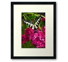 Flutterby on Sweet Williams Framed Print
