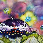 Watercolour 'Butterfly' by Robyn Gosby