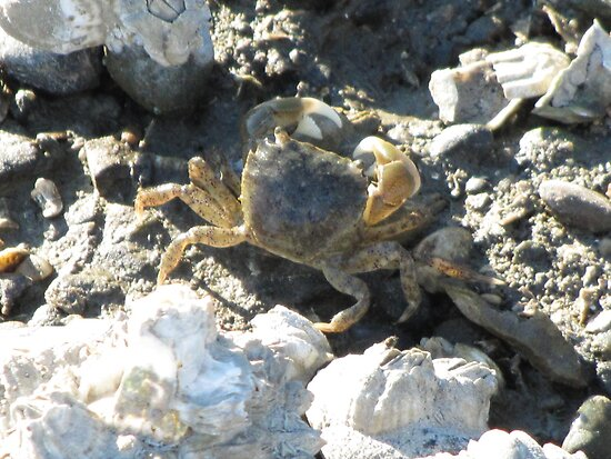 Shoreside Crabby Worker on the Sound by M-EK