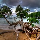 Hawaiian Tree at Sunset by thatche2
