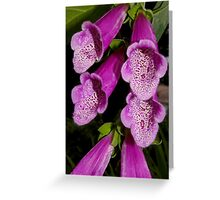 hot pink foxglove Greeting Card