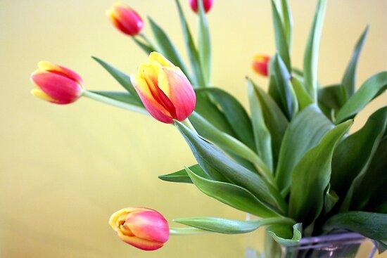 Tulips in Glass Vase by AuntDot