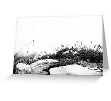 Sea Campion Wall Greeting Card