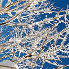 Winter Branches  by Nicole  Markmann Nelson