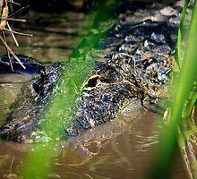 See ya later... - Florida, USA by Sean Farrow