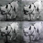 Bulldog by rentedochan