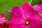 Wet and Pink by Adam Bykowski