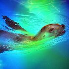 Sea Lion by venny