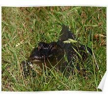 Alligator Portrait #4. Melbourne Shores. Poster