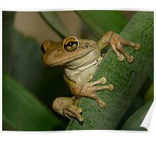 Tree Frog Portrait #2. Poster