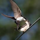 I Think This Is Why They Are Called Swallows by Gary Fairhead