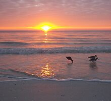 Plovers at Sunset by Carla Barone