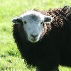 Herdwick Lamb by Marilyn Harris