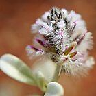 White flower by bluetaipan