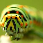caterpillar's funny face by davvi