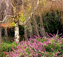 Weeping Cherry Tree by yawls1