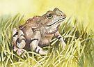 Frog by Val Spayne
