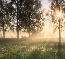 Scent of Summer by Remo Savisaar