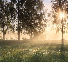 Scent of Summer by Remo Savisaar
