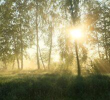 Summertime by Remo Savisaar